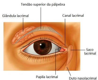 região dos olhos